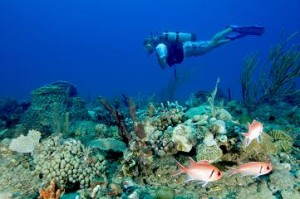 A diver swims over the mini wall off NW point dive site, with squirrelfish in the foreground, Montserrat, Caribbean Sea.